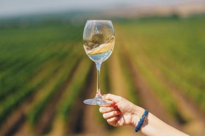 Care sunt principalele diferențe dintre vinurile roșii și cele albe?